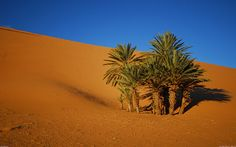 A little oasis in the Moroccan desert Desert Oasis, North Africa, Places To Travel, Deserts, Stock Photos, Plants, Homeland, Geo, Rock