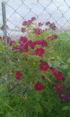 Random bush