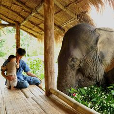Elephant Sanctuary, Thailand.