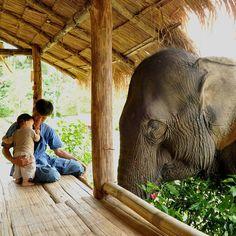 Santuario de elefantes, Tailandia