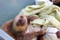 25 Baby Bucket Sloths Guaranteed To Get You Through A Rough Day