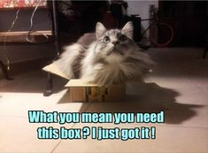 22 Funny Animal Pictures for Today  If You'd like, click the link to see more like this: http://dummiesoftheyear.com/22-funny-animal-pictures-for-today/