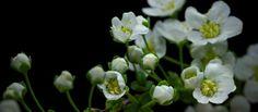 Video | Ver las flores crecer