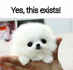 One Of The Cutest Things I Have Ever Seen (it looks like a stuffed toy)