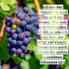 #weinstock #reben #jesus #gleichnis #vergleich #gott #heiligerGeist #bibel #bibelvers #johannes #neuesTestament #stewi Johannes, Profile, Photo And Video, Instagram, Simile, Holy Spirit, God, User Profile
