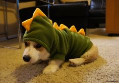 """Here is the infamous and elusive """"Stumposaurus.""""   Corgnelius Got A New Brother Named Stumphrey And He'sAdorable"""