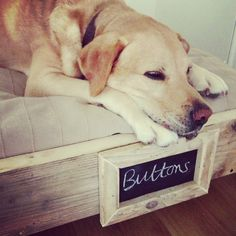 Rustic Solid Wood Dog Bed Frame with chalkboard frame for pet name. Made to Order. Country style. Any Size.