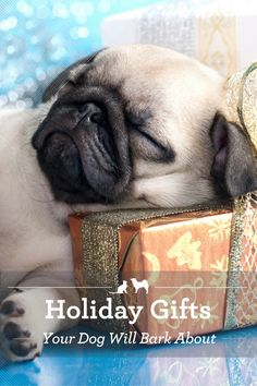 Holiday Gifts Your Dog Will Bark About. Have you fallen into the rut of buying your dog the same old tennis ball year after year? Here are some thoughtful gifts for dogs that he'll love even more! via @kristenlevine