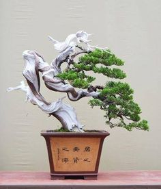 Bonsai w/ extreme deadwood work, natural looking & doesn't compete w/ the trees natural flow right. In Chinese pot