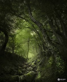 Overgrown II - A rocky path through overhanging trees the Ardennes. Magic Forest, Forest Art, Woodland Forest, Deep Forest, Tree Photography, Landscape Photography, Old Trees, Walk In The Woods, Nature Pictures