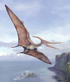 Pteranodon by Val Walerczuk Dinosaur Sketch, Dinosaur Drawing, Dinosaur Art, Dinosaur Fossils, Prehistoric Wildlife, Prehistoric Dinosaurs, Prehistoric Creatures, Dinosaur Photo, Dinosaur Pictures