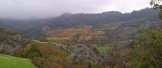 Wijngaarden bij Spigno Monferrato - herfstkleuren