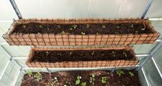 Vertical Gardening -
