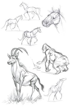 animal sketches - Google Search