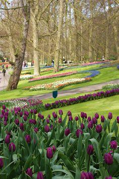 Tulips, Keukenhof Gardens, The Netherlands.  Photo: KarlGercens.com, via Flickr