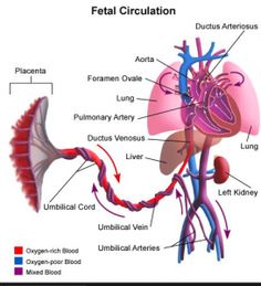 Critical Congenital Heart Defect Screening - Newborn Test