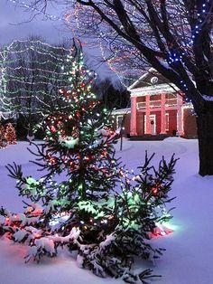 beautiful christmas lights snow - New Year Christmas Tree And Santa, Beautiful Christmas Trees, Colorful Christmas Tree, Christmas Scenes, Outdoor Christmas, Winter Christmas, Christmas Lights, Vintage Christmas, Christmas Decorations