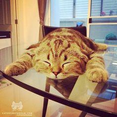 From @kenta_bieber #catsofinstagram [catsofinstagram.com]...