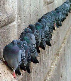 Very discipline pigeonGoogle+