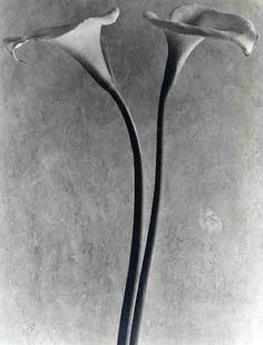 Calla Lilies Photographed by Tina Modotti.