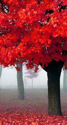 beautiful fall colors....