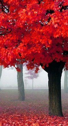 beautiful fall colors....