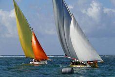 Les amirés en régate à l'Ile Maurice