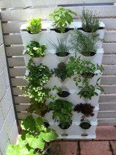 zimmerpflanzen pflegeleicht topfpflanzen balkonpflanzen kräutergarten