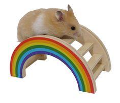 Hamsters love climbing the Rainbow Play Bridge