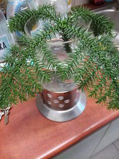 Szukam nazwy tej rośliny :) Ktoś, coś? 😉