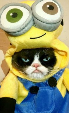 Goodbye Grumpy Cat 😢 Thanks for all the memes I Love Cats, Cute Cats, Funny Cats, Funny Animals, Cute Animals, Wild Animals, Grumpy Cat Humor, Cat Memes, Funny Memes