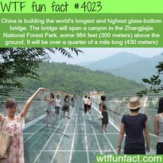 longest and highest glass-bottom bridge in the world - WTF fun facts