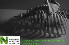 I had the idea to turn this photograph of a prosthetic ribcage into an advert for the Natural History Museum. It was photographed in monochrome, and the aim was to create a shadow. I used an LED light to give a hard shadow. I then used a bright green colour for the text to make it stand out, as it also matched the bright colour of the text of the logo.
