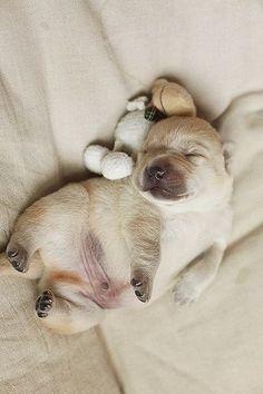 Take a nap with me...