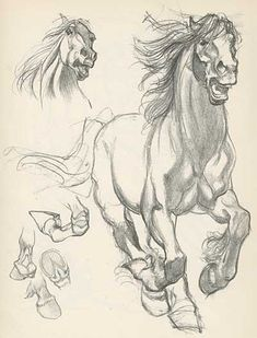 Animal Drawings draft horse sketches by Willy Pogany Horse Drawings, Animal Drawings, Art Drawings, Drawing Animals, Drawing Portraits, Animal Sketches, Drawing Sketches, Sketching, Illustration Manga