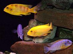 Close up of the nooks in the rock aquarium