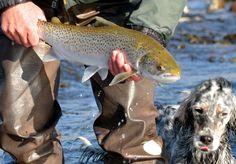 Fly fishing sea trout Ireland