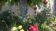 flowers in Melle