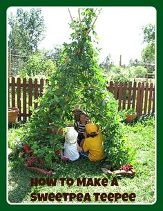 This Sweetpea Teepee is so much fun to grow with your littles and you'll save money when your grow your own product too!!