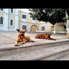 Two stray dogs on the church steps in San Jose del Cabo San Jose Del Cabo, Baja California, Places Ive Been, Mexico, Scrap, Explore, Gallery, Dogs, Fun