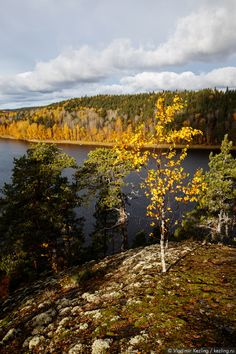 Ладожское озеро — Lake Ladoga - no not the sea. But it was not always so - only some eight thousand years ago, the Karelian Isthmus had been hidden under the water, Ladoga, and in those days was part of the real sea.