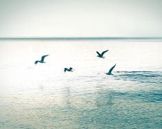 birds flying photography beach nautical decor by mylittlepixels