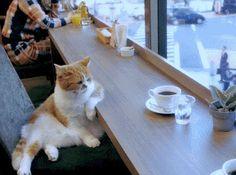 Coffee cat.