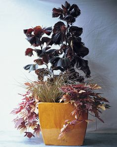 Textural contrast adds life to this mostly monochromatic display, showing off shades of copper. Copperleaf (Acalypha wilkesiana 'Haleakala'); Toffee Twist Sedge (Carex…