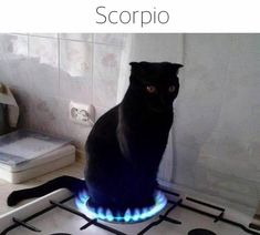 """35 Purrrrfect Cat Memes For Your Caturday Enjoyment - Funny memes that """"GET IT"""" and want you to too. Get the latest funniest memes and keep up what is going on in the meme-o-sphere. Scorpio Traits, Scorpio Funny, Scorpio Zodiac Facts, Zodiac Funny, Zodiac Signs Astrology, Zodiac Memes, Zodiac Star Signs, Scorpio Quotes, Zodiac Personalities"""