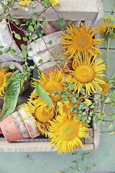 You can`t use up CREATIVITY. My Flower, Flower Power, Vibeke Design, Sunflower Wallpaper, Bottle Garden, Floral Artwork, Floral Photography, Foto Art, Rose Cottage