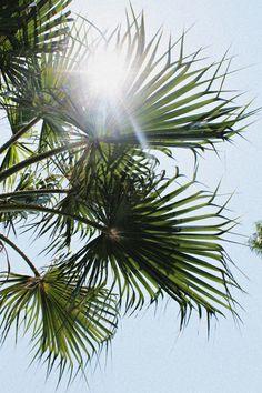 Sunshine + palms.