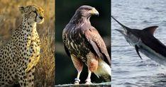 Quiz-uri amuzante si teste cu intrebari de cultura generala | Goki.ro Owl, Bird, Reiki, Animals, Animales, Animaux, Owls, Birds, Animal