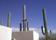 cell phone tower disguised as a cactus (3)