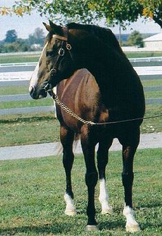 The great Northern Dancer; 1964 KY Derby winner and great sire of many famous thoroughbreds